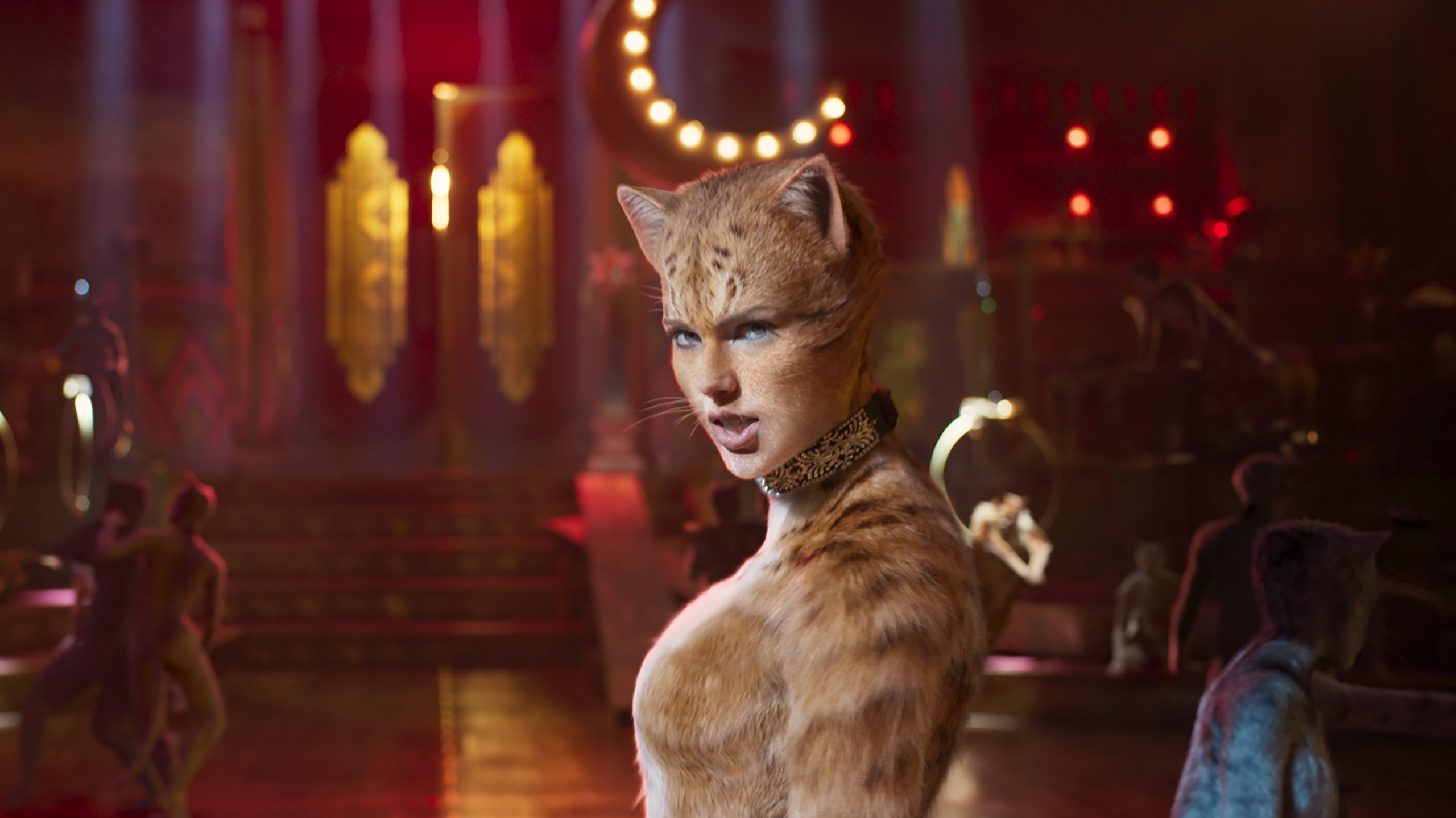 taylor-swift-cats